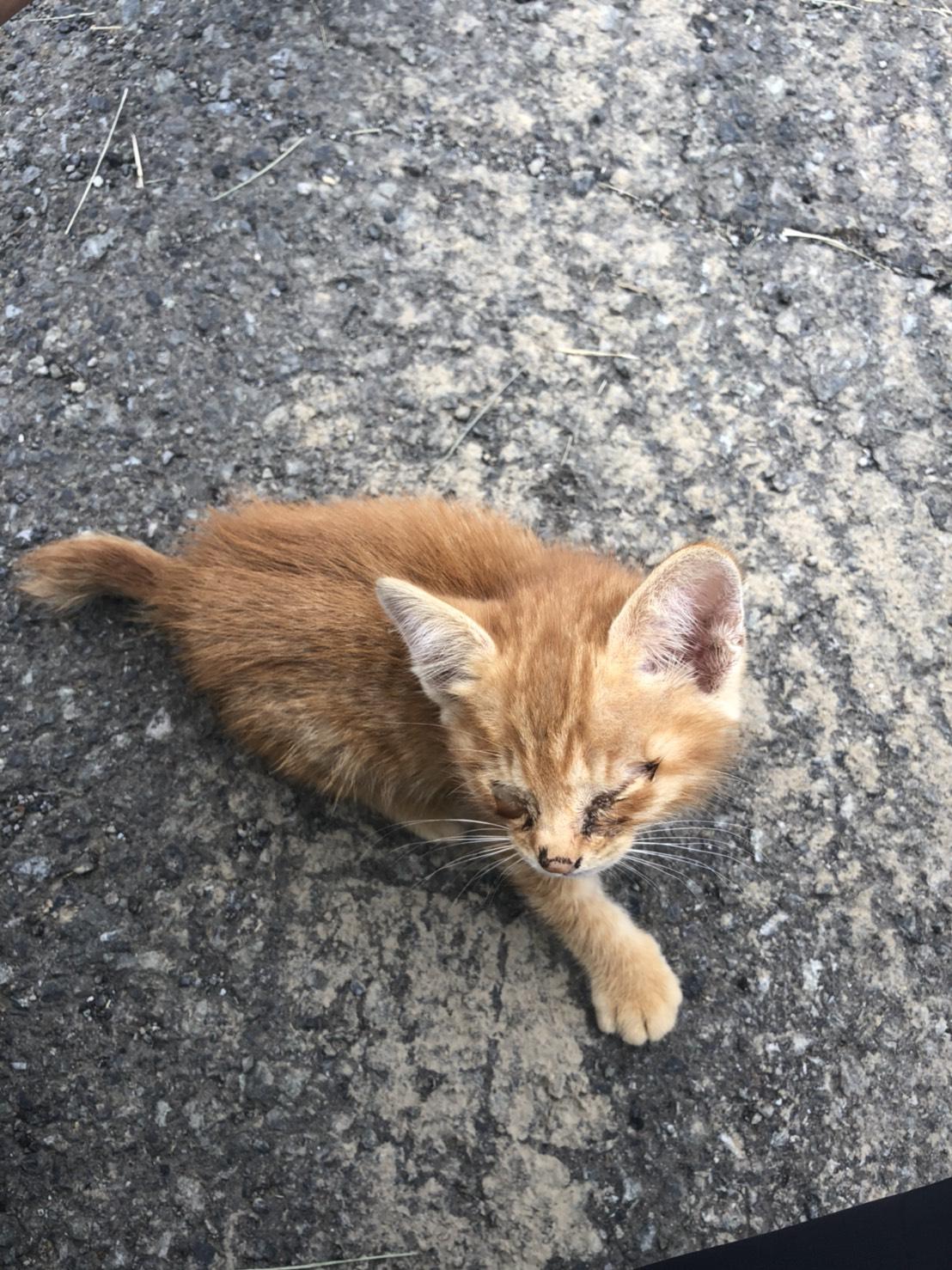 倒れていた猫ちゃん