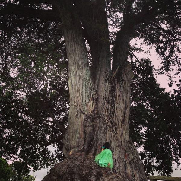 ニュージーランドの大木で木登りする子ども