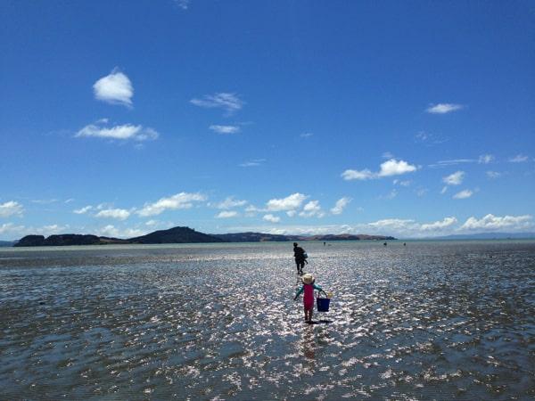 ニュージーランドで潮干狩