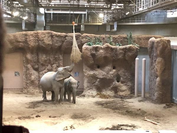 円山動物園のゾウ