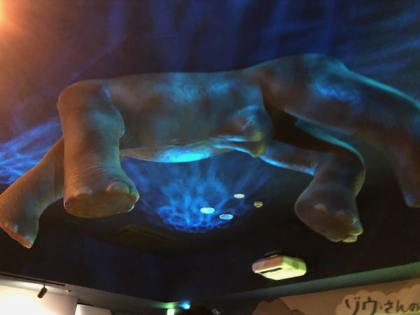 円山動物園ゾウ舎の展示
