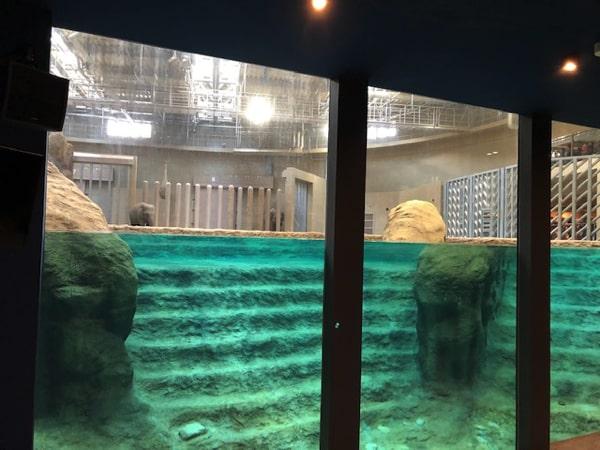 円山動物園ゾウ舎の水のステージ