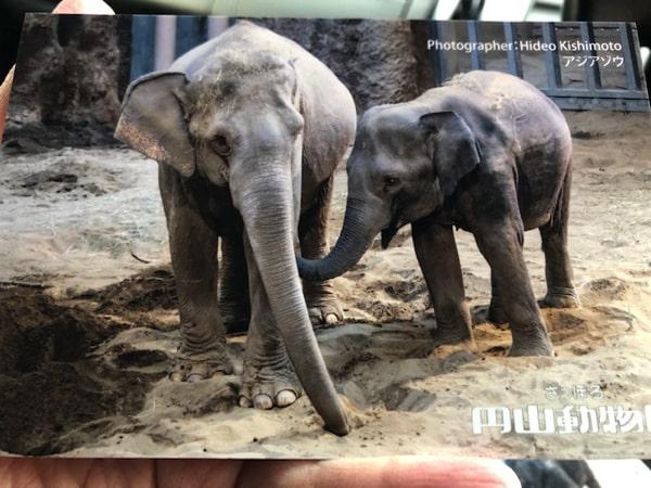 ゾウのポストカード